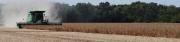 Harvest 3 (D)