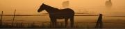 Horse (D)