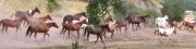 Horses (T)