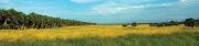 Meadow 2 (D)