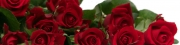 Roses (T)
