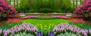 Flower-Garden----Tent-Backdrop